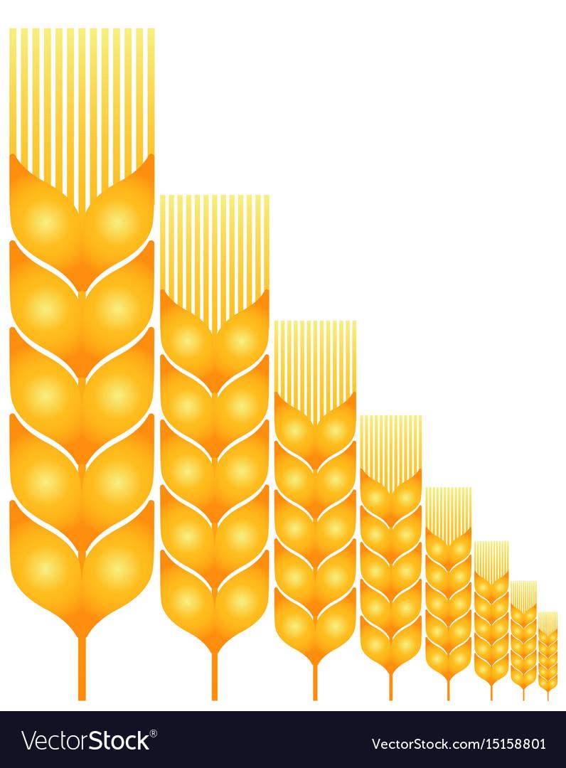 Field ripe wheat vector image