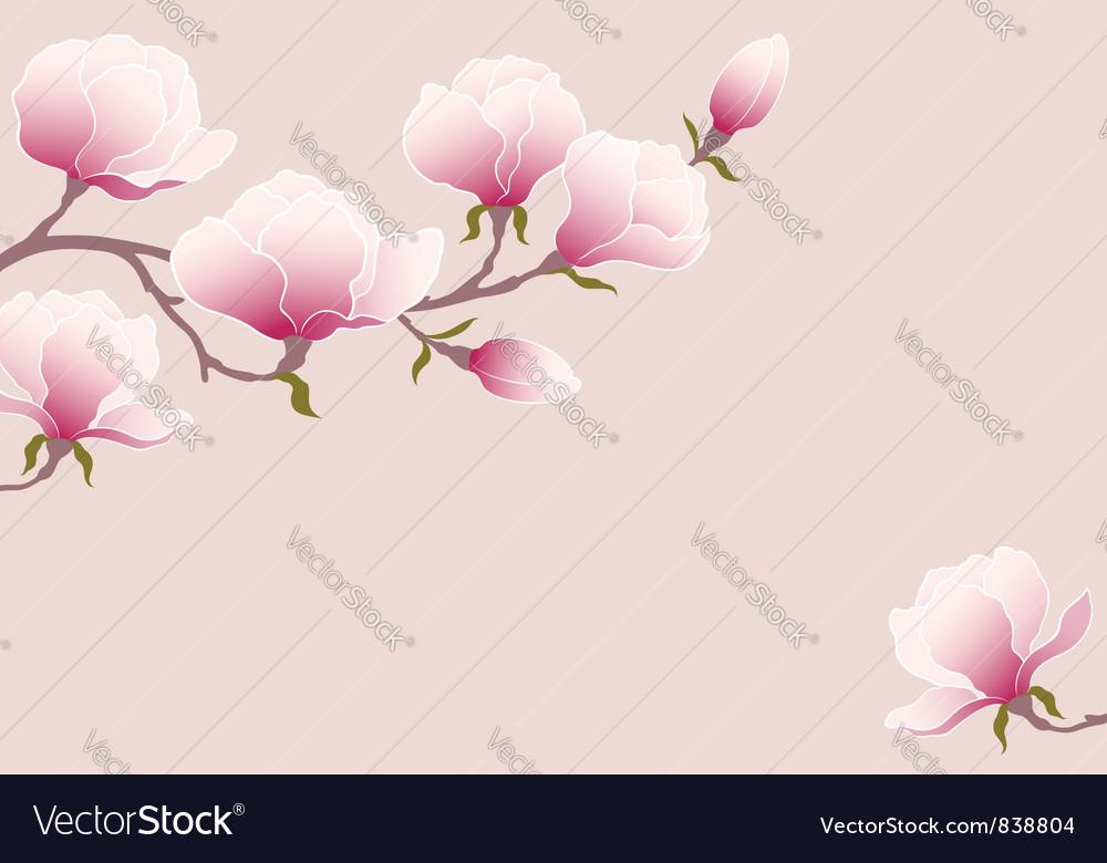 Tender magnolia vector image