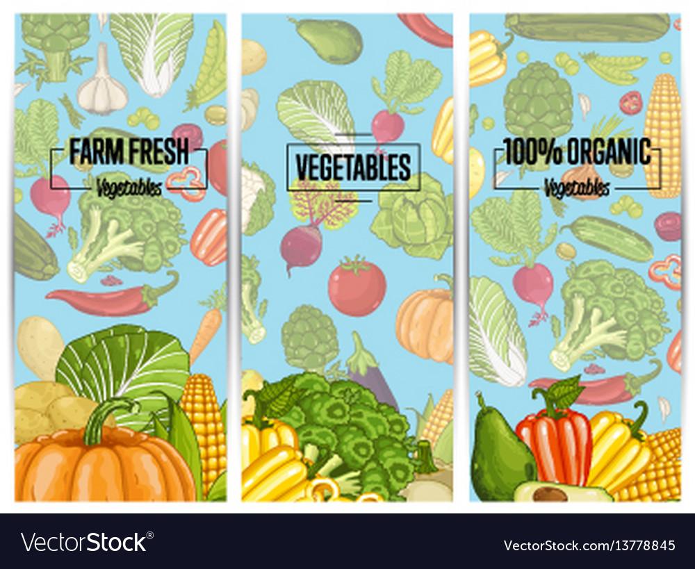 Organic vegetable farming flyers set vector image