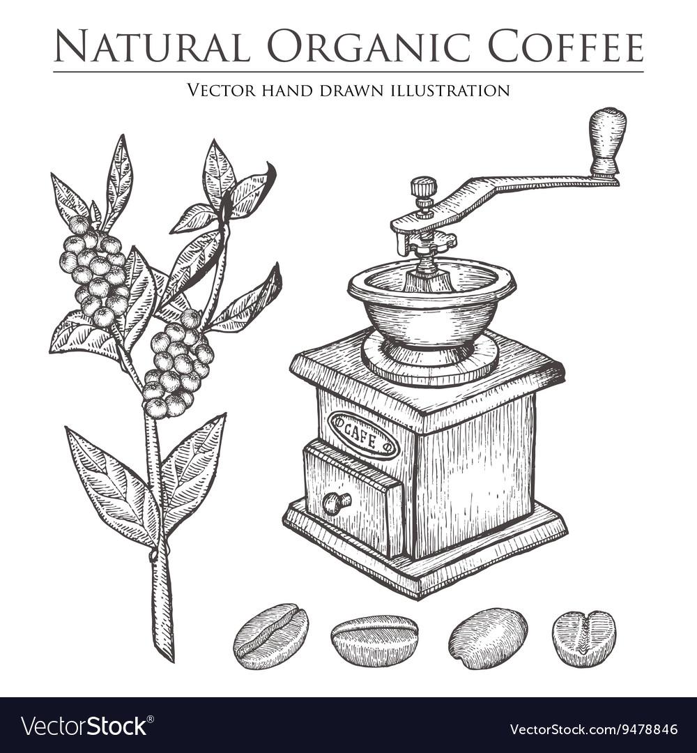 Coffee Bean Grinder vector image