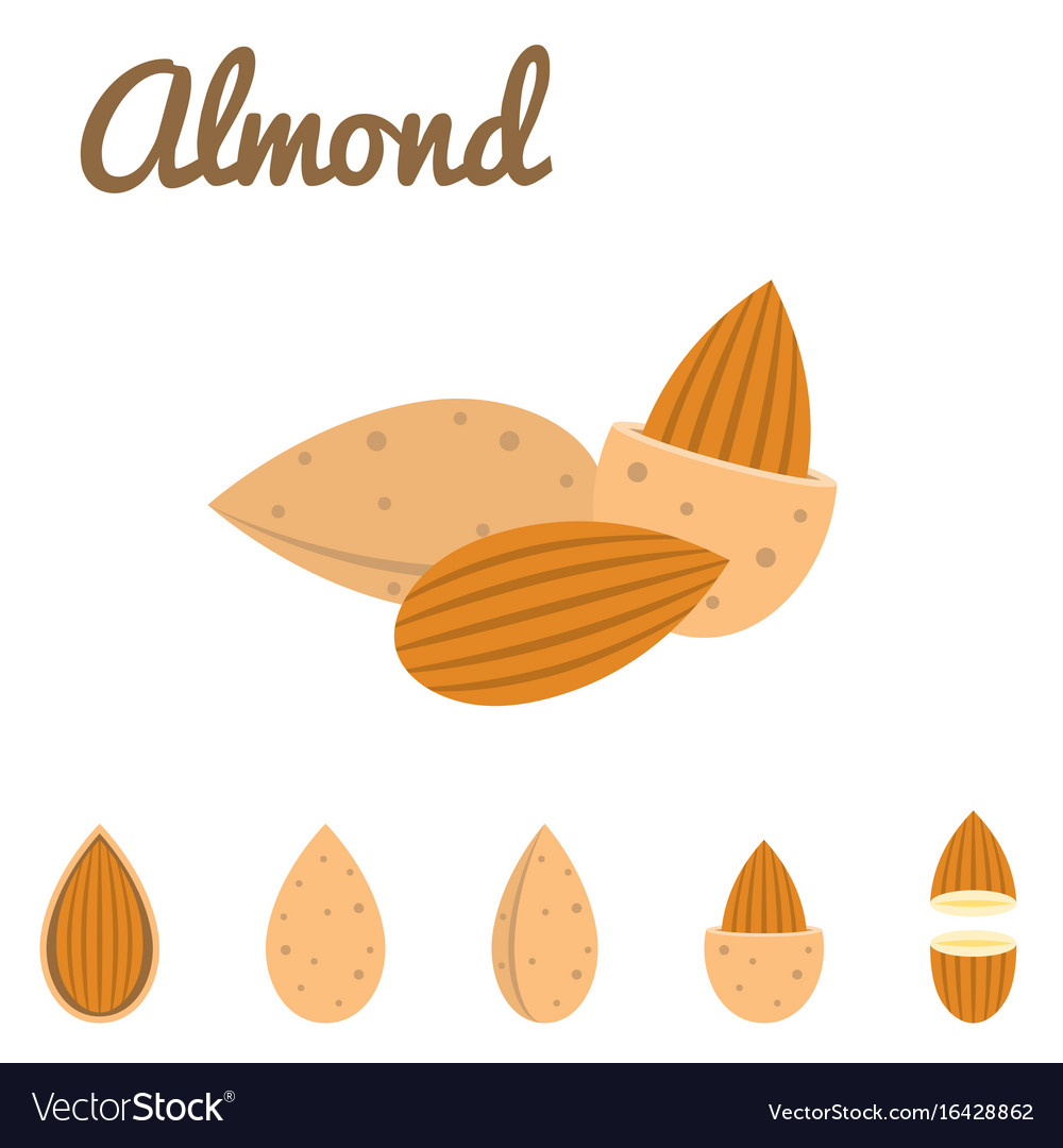 Almond icon vector image