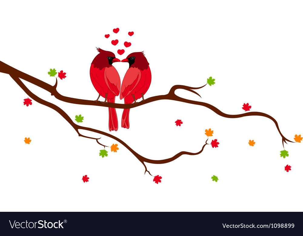 Love Birds on Tree Branch vector image
