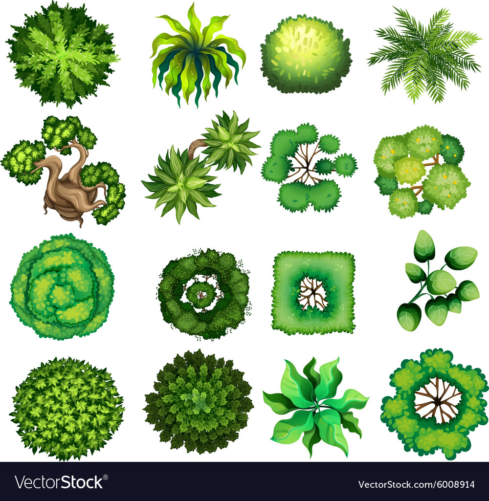 Top view of different kind of plants Royalty Free Vector for Plant Top View Vector  568zmd