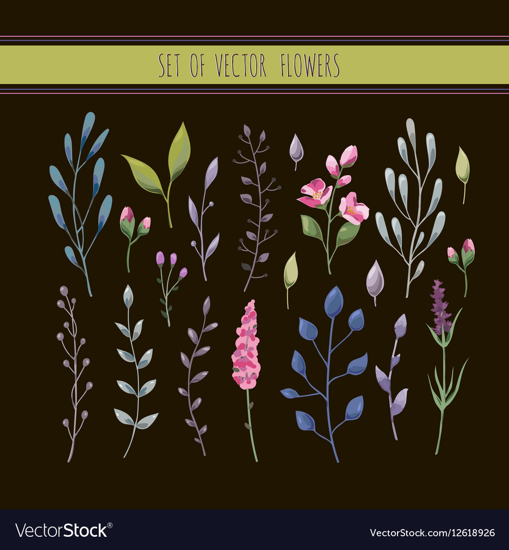 Floral watercolor collection with leaves and vector image