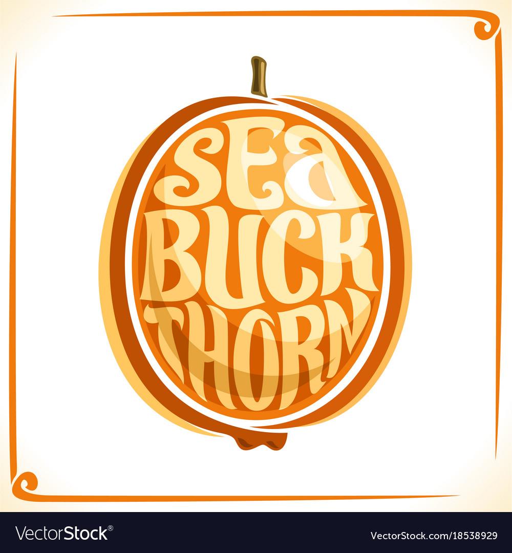 Logo for sea buckthorn royalty free vector image logo for sea buckthorn vector image biocorpaavc Choice Image
