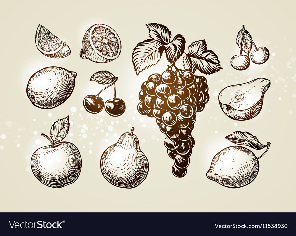 Set fruits sketch Hand-drawn elements such as vector image