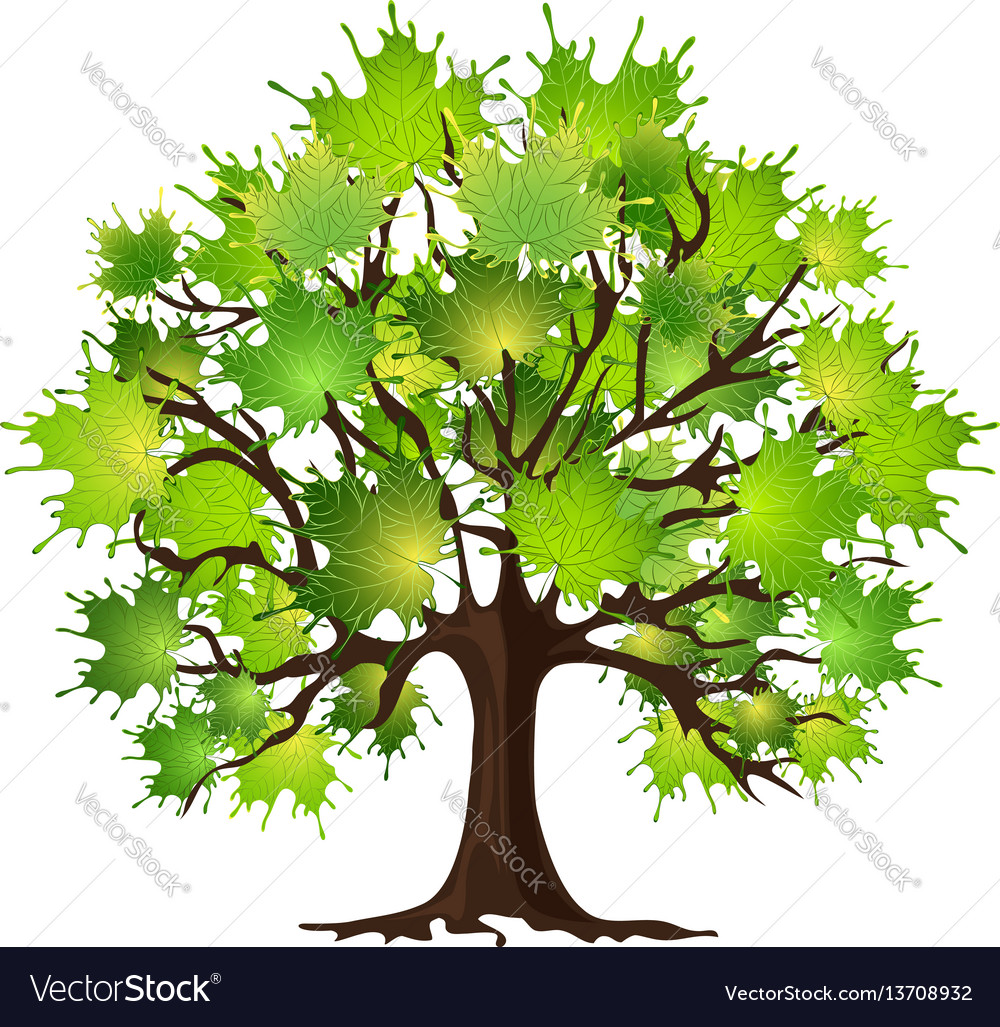 Maple tree on white vector image