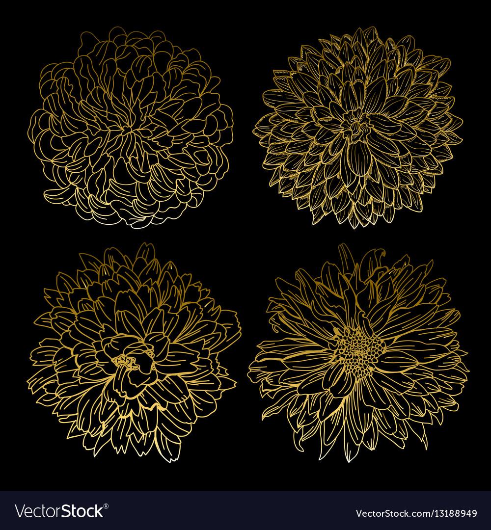 Golden chrysanthemums set vector image
