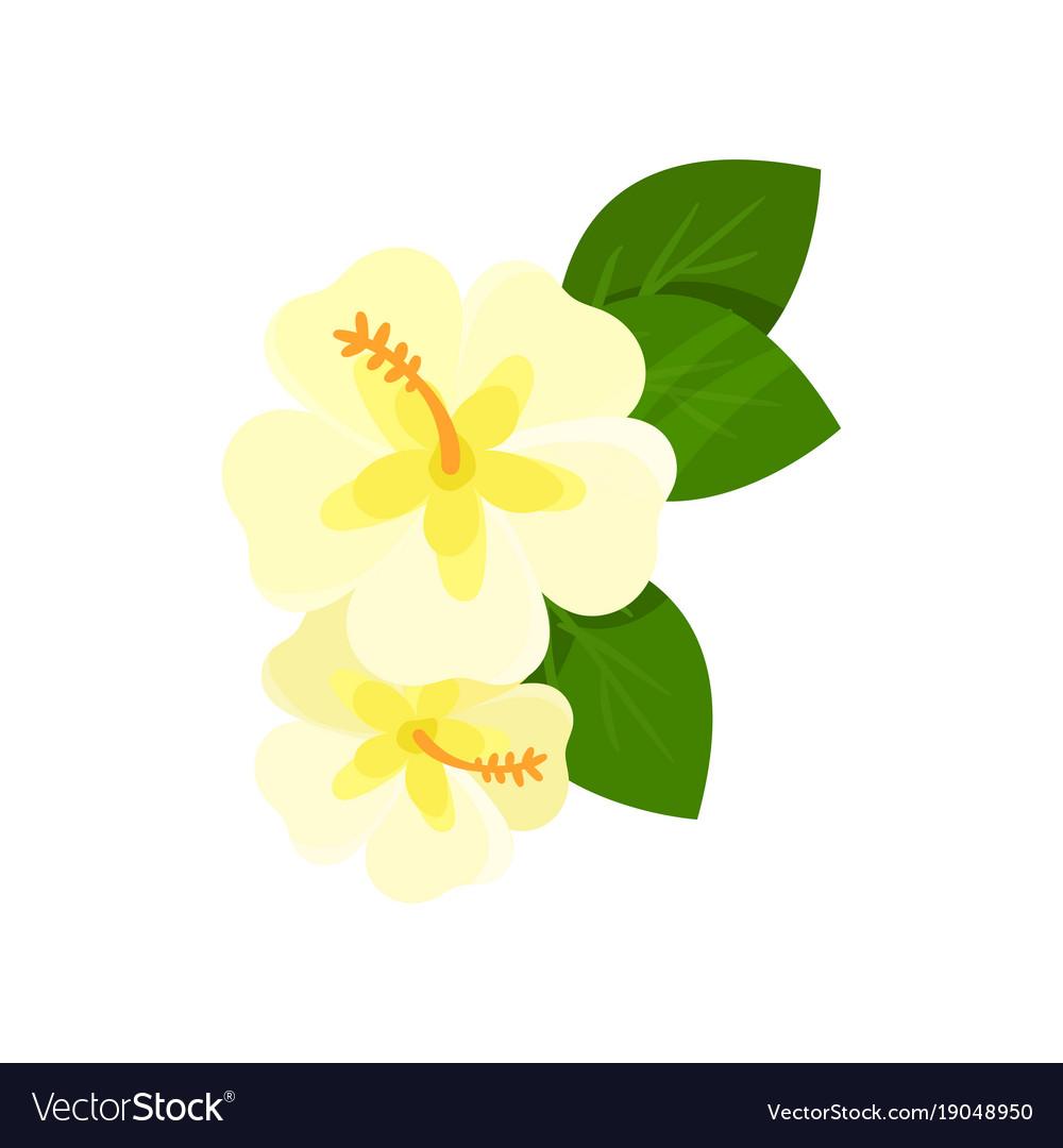 Hawaiian flowers cartoon image collections flower wallpaper hd hawaiian flower cartoon image collections flower wallpaper hd hawaiian flower cartoon image collections flower wallpaper hd izmirmasajfo