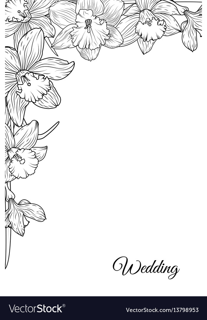 Narcissus daffodil flowers corner frame template vector image