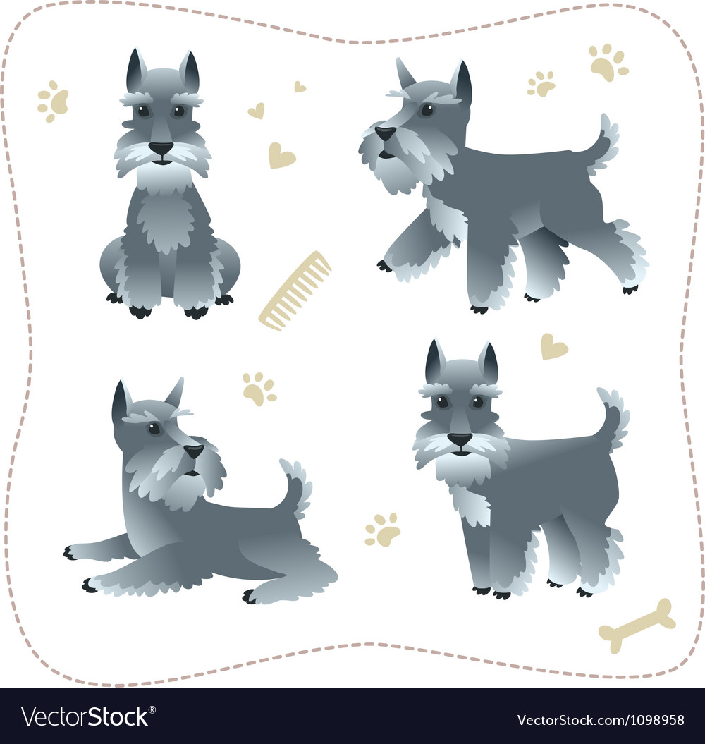 Set of schnauzer pupys vector image