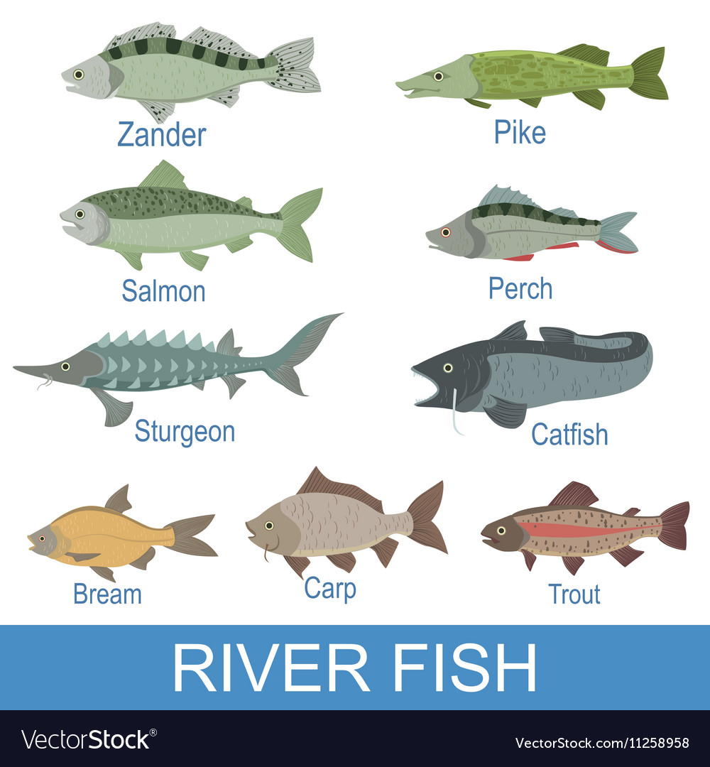 What are the names of fish best fish 2017 for Scientific name of fish