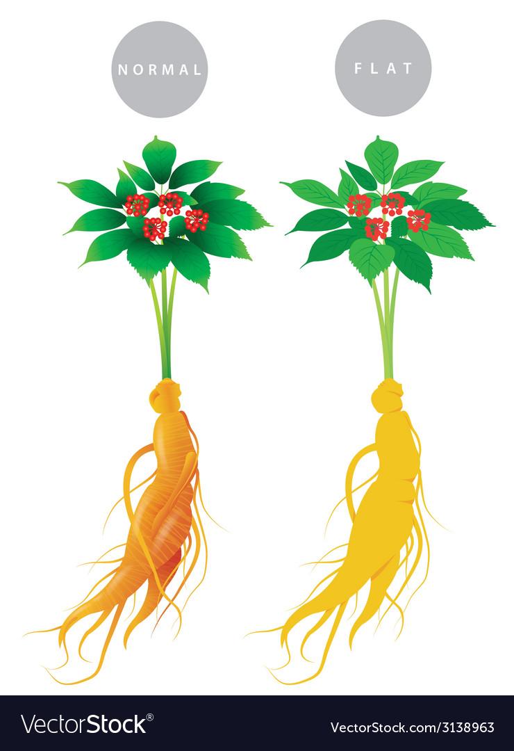 Ginseng root vector image