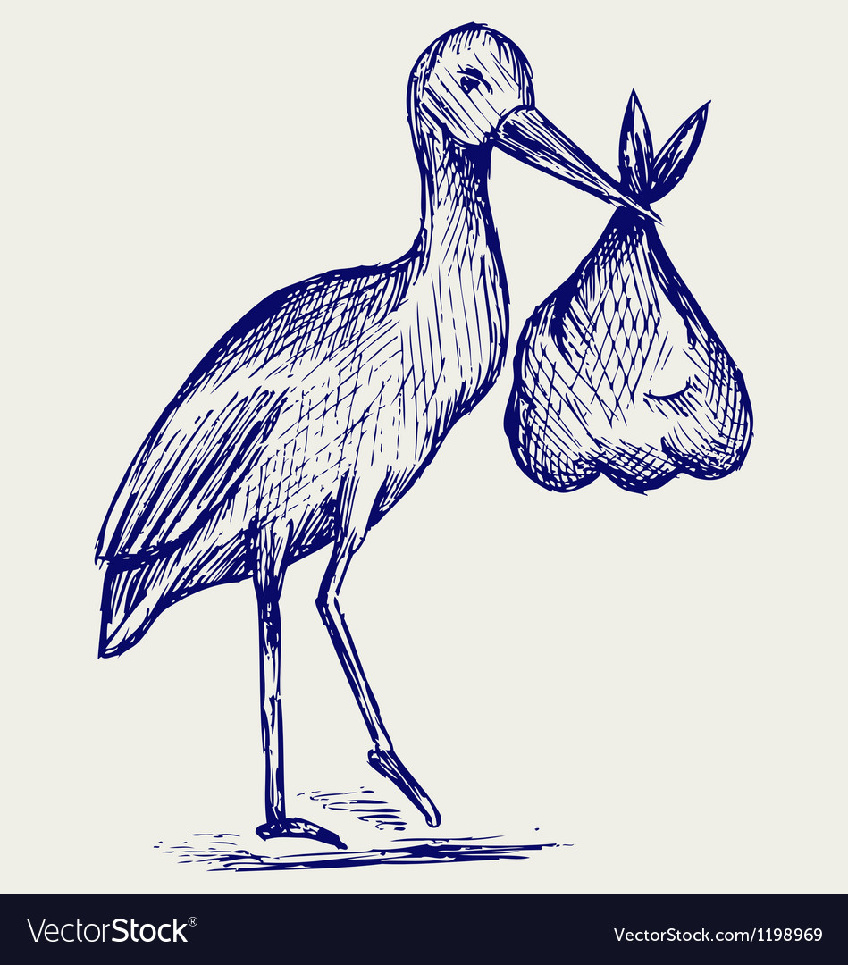 Stork and baby vector image