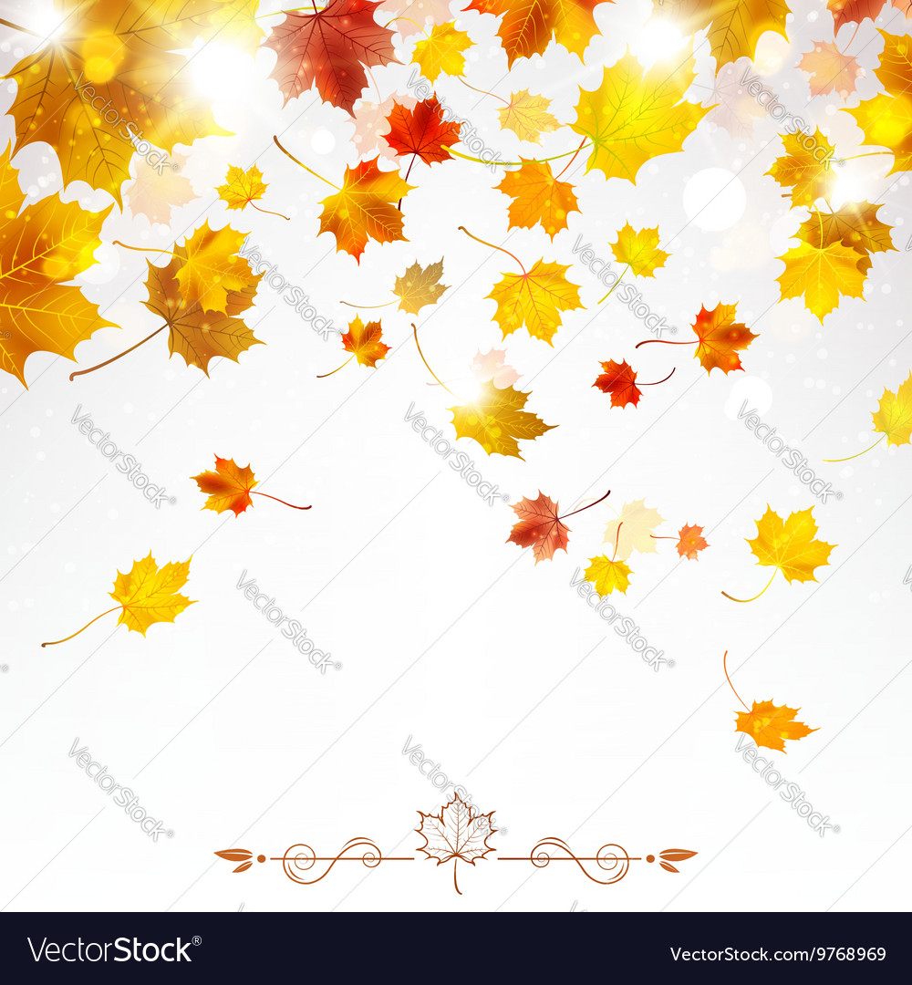 Autumn Falling Maple Leaves vector image