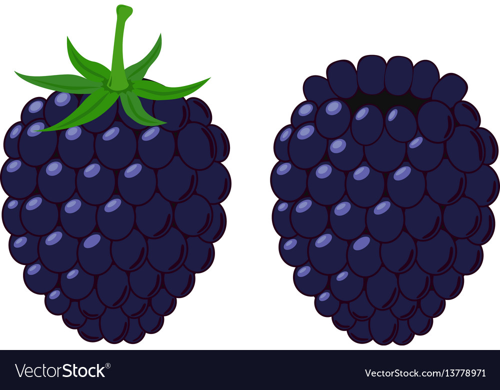 Isolated flat blackberry juicy berry with leaves vector image