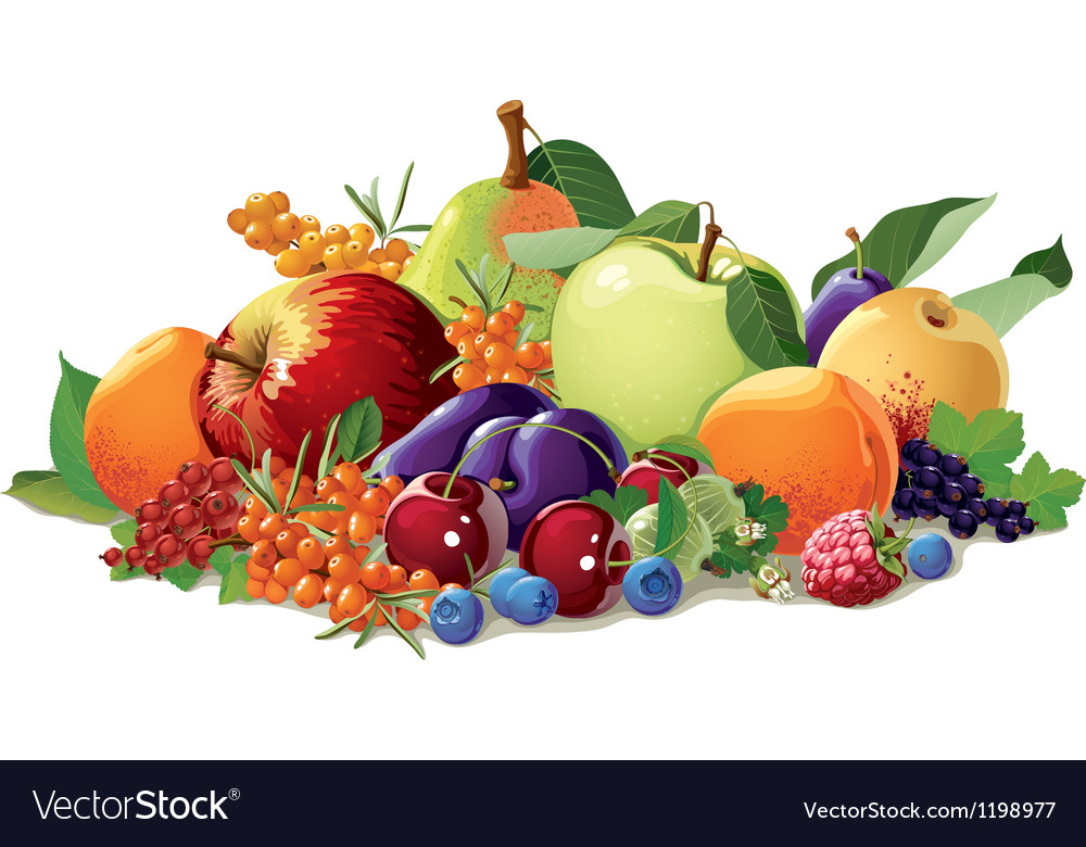 Still life of fruit and berries vector image