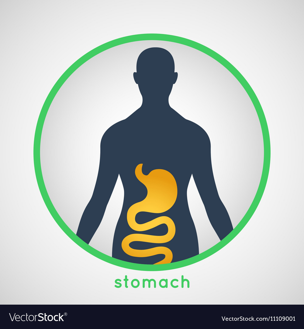 Stomach Poster vector image