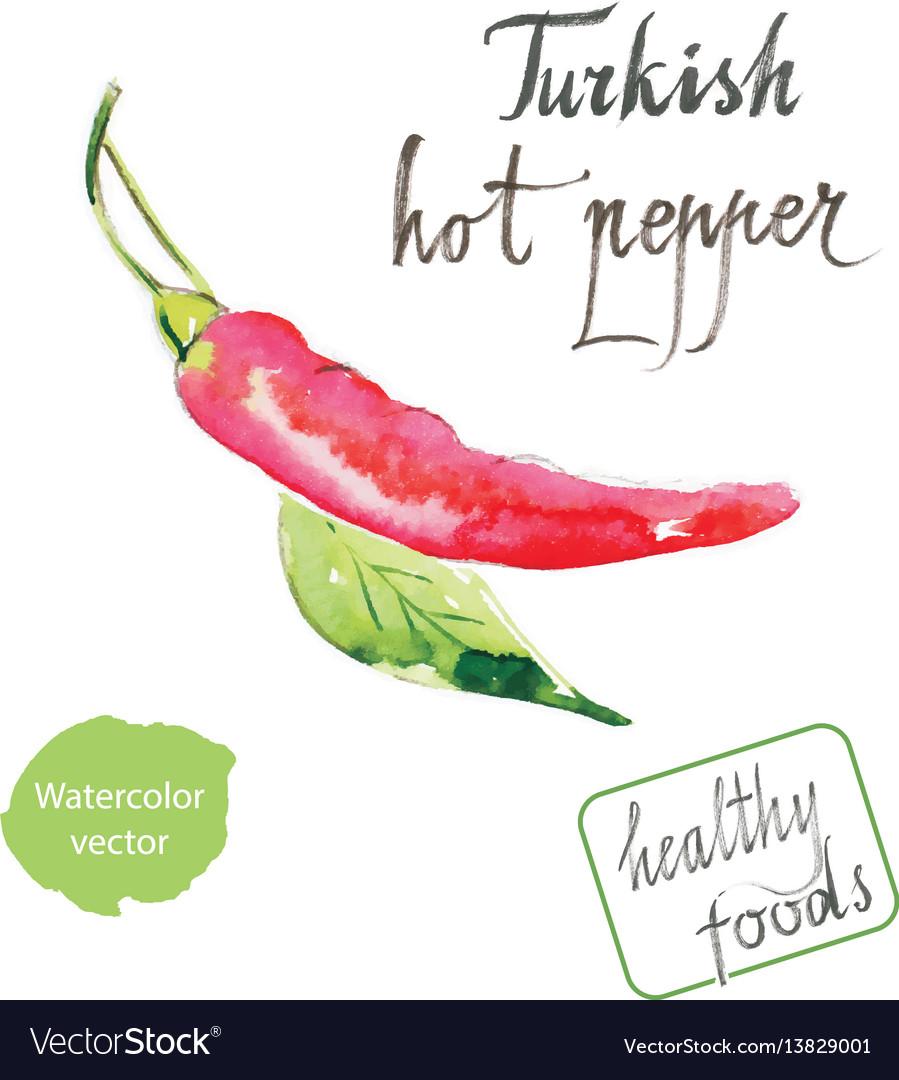 Watercolor turkish hot pepper vector image