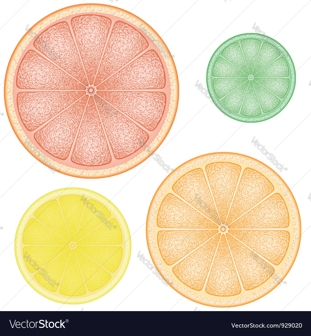 Set of citrus 01 Vector Image