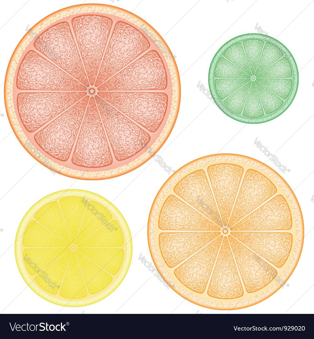 Set of citrus 01 vector image