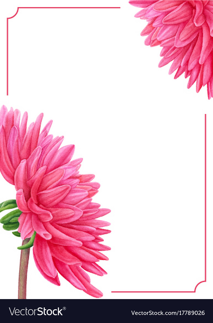 Watercolor pink dahlia botanical art template vector image