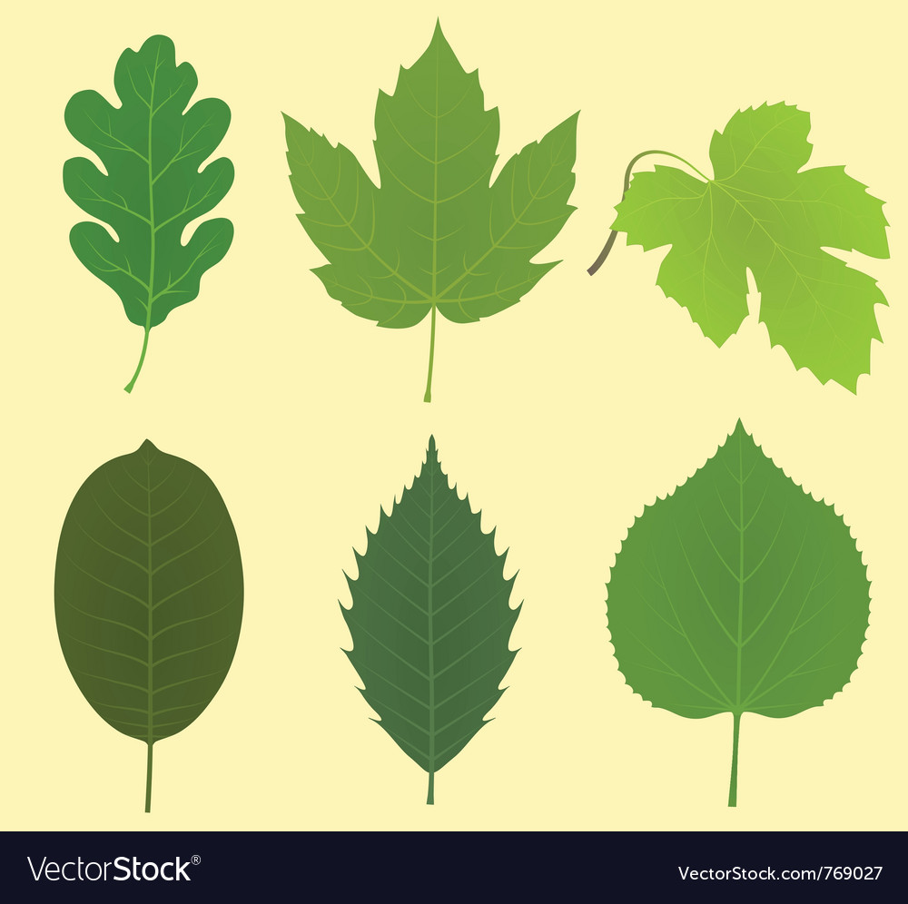 collection of leaves royalty free vector image