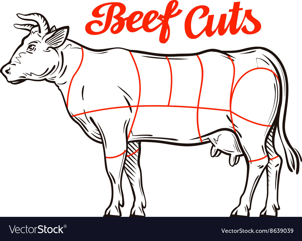 Beef chart meat cuts or butcher shop Royalty Free Vector for Beef Meat Cuts Chart  113cpg
