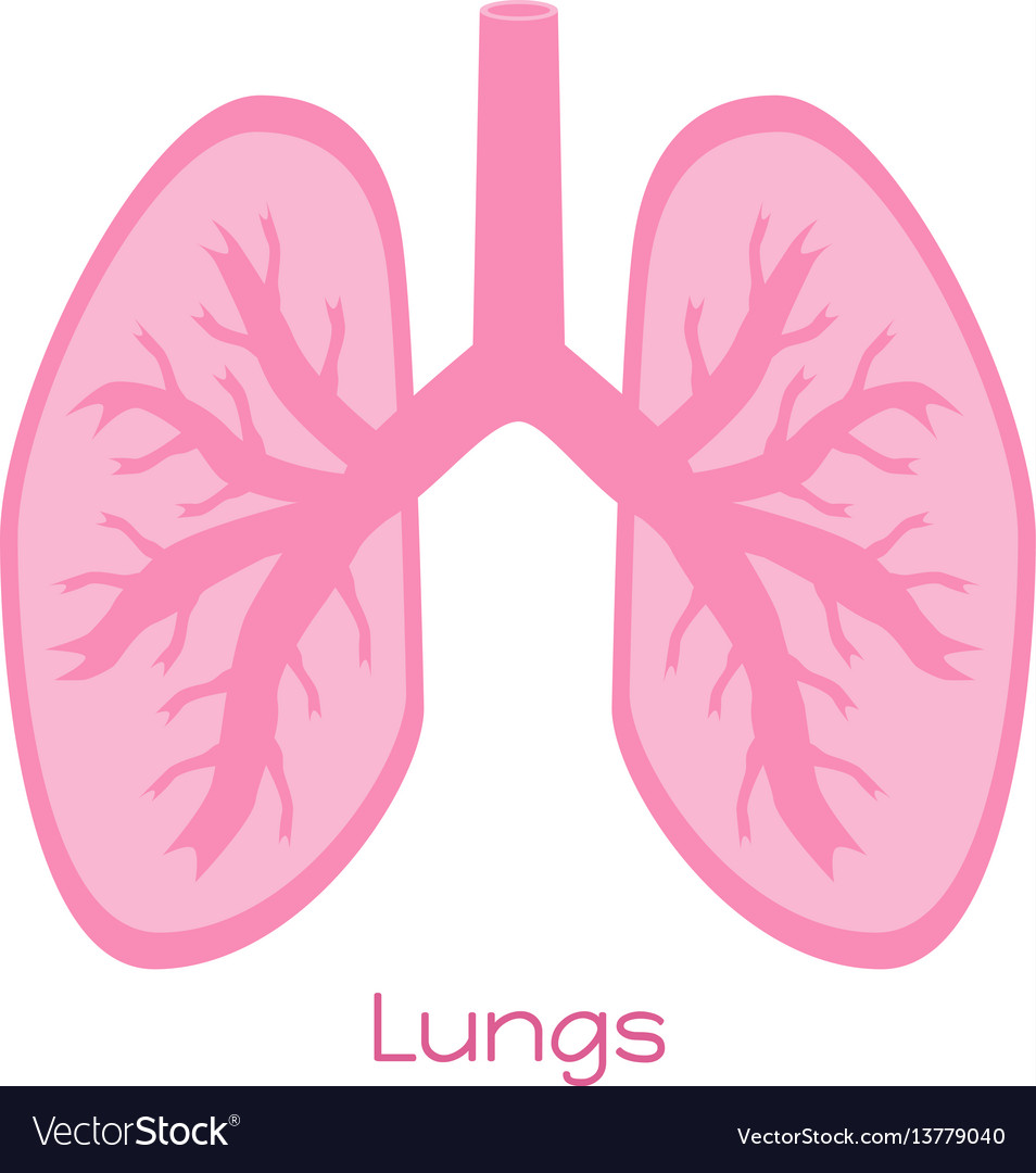 Lungs in flat style viscera icon internal organs vector image
