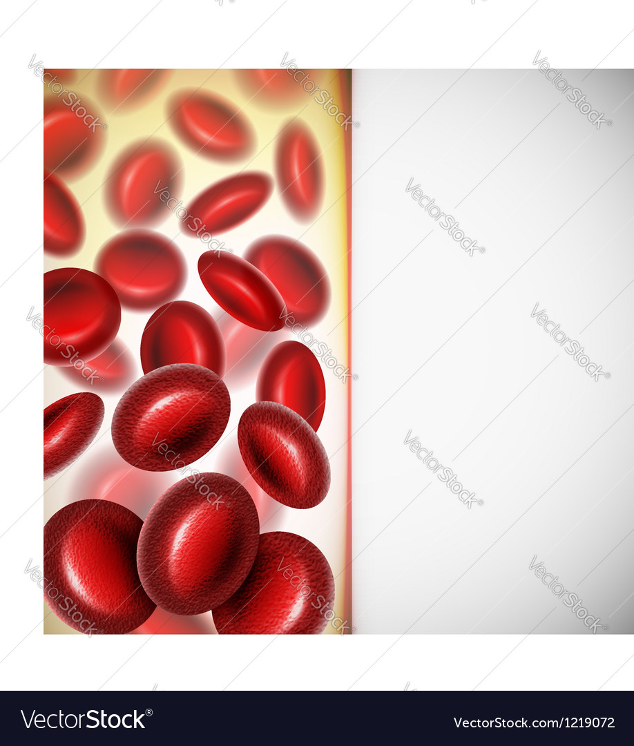 Blood cells vector image