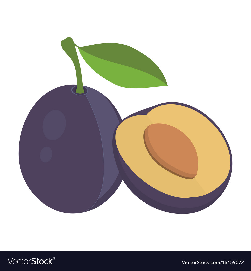 Plums with leaf vector image
