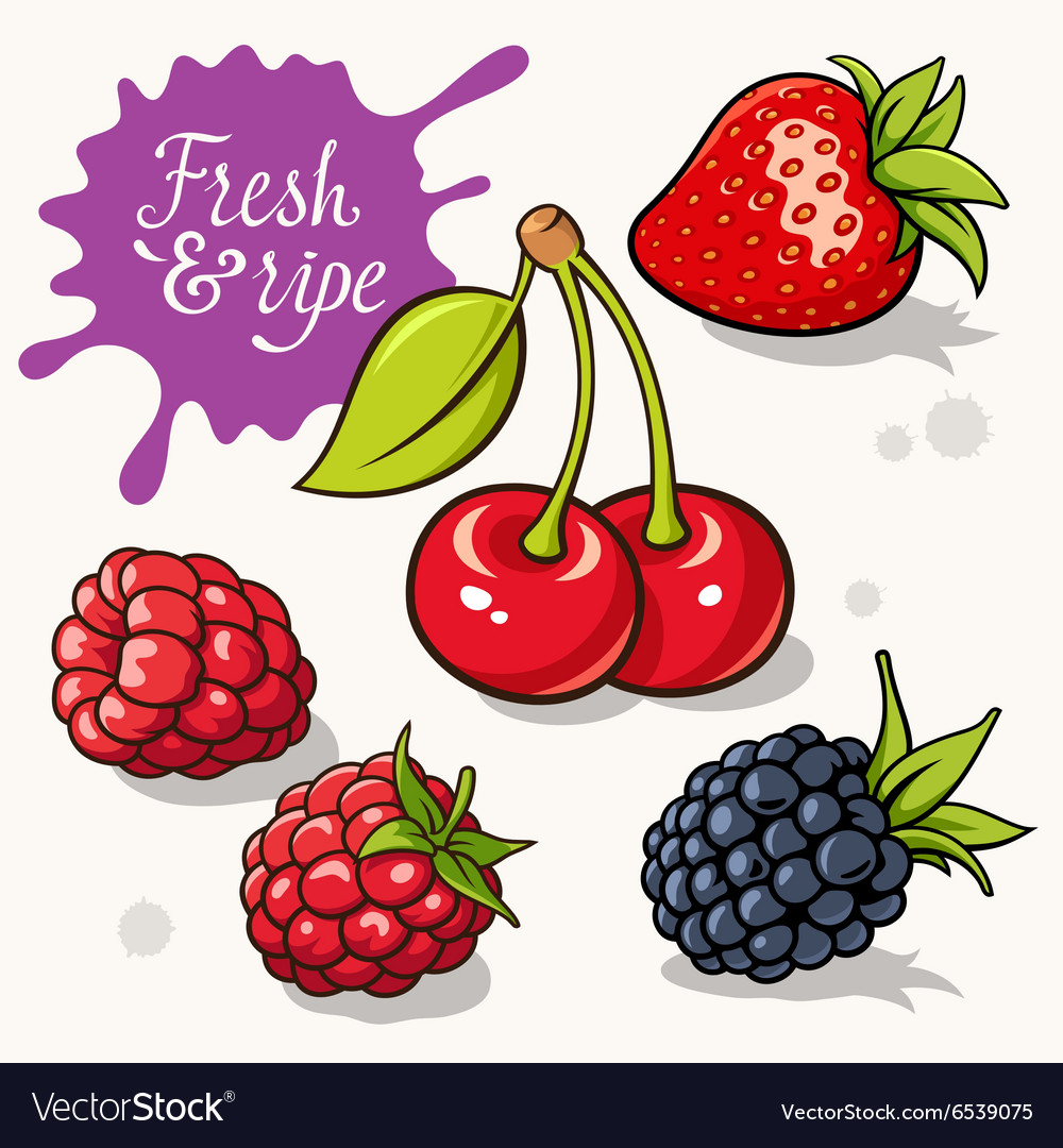 Berries set 001 vector image