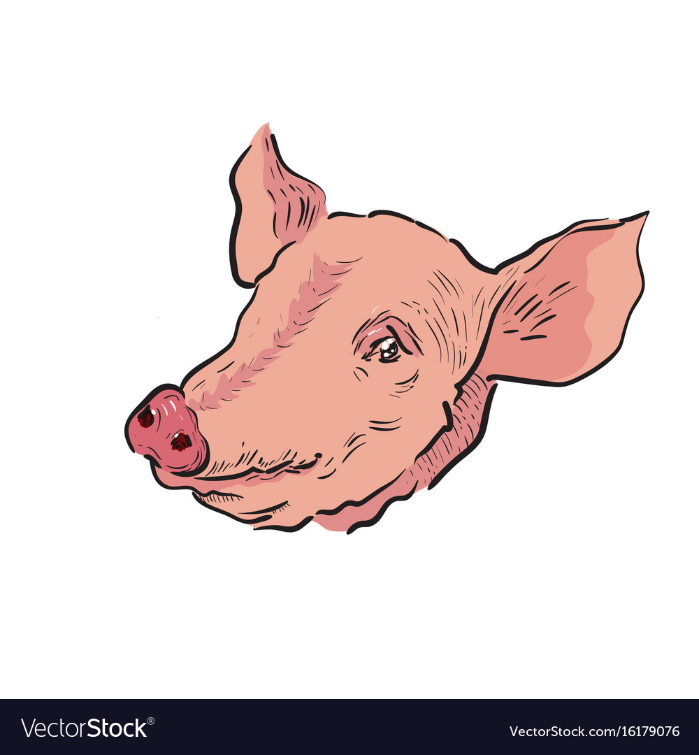 Color sketch pig vector image