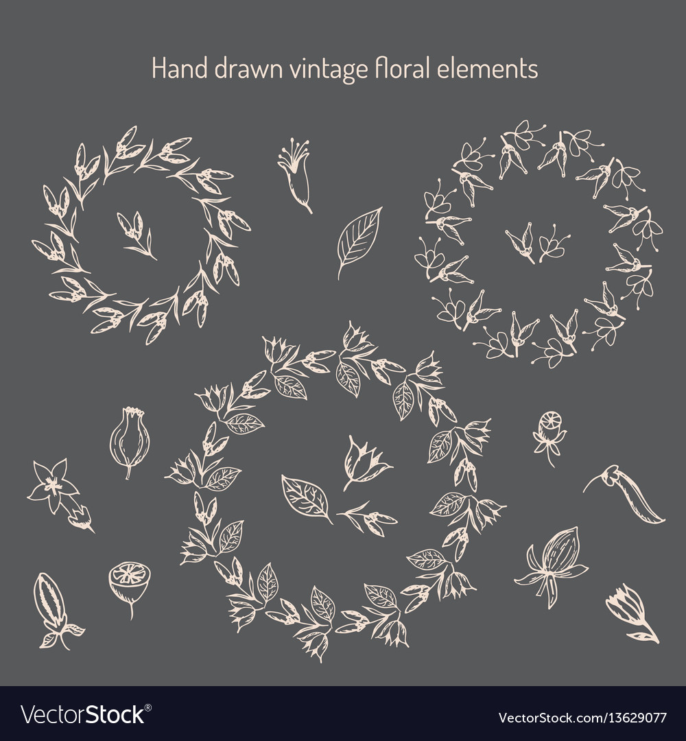 Hand drawn vintage floral elements vector image
