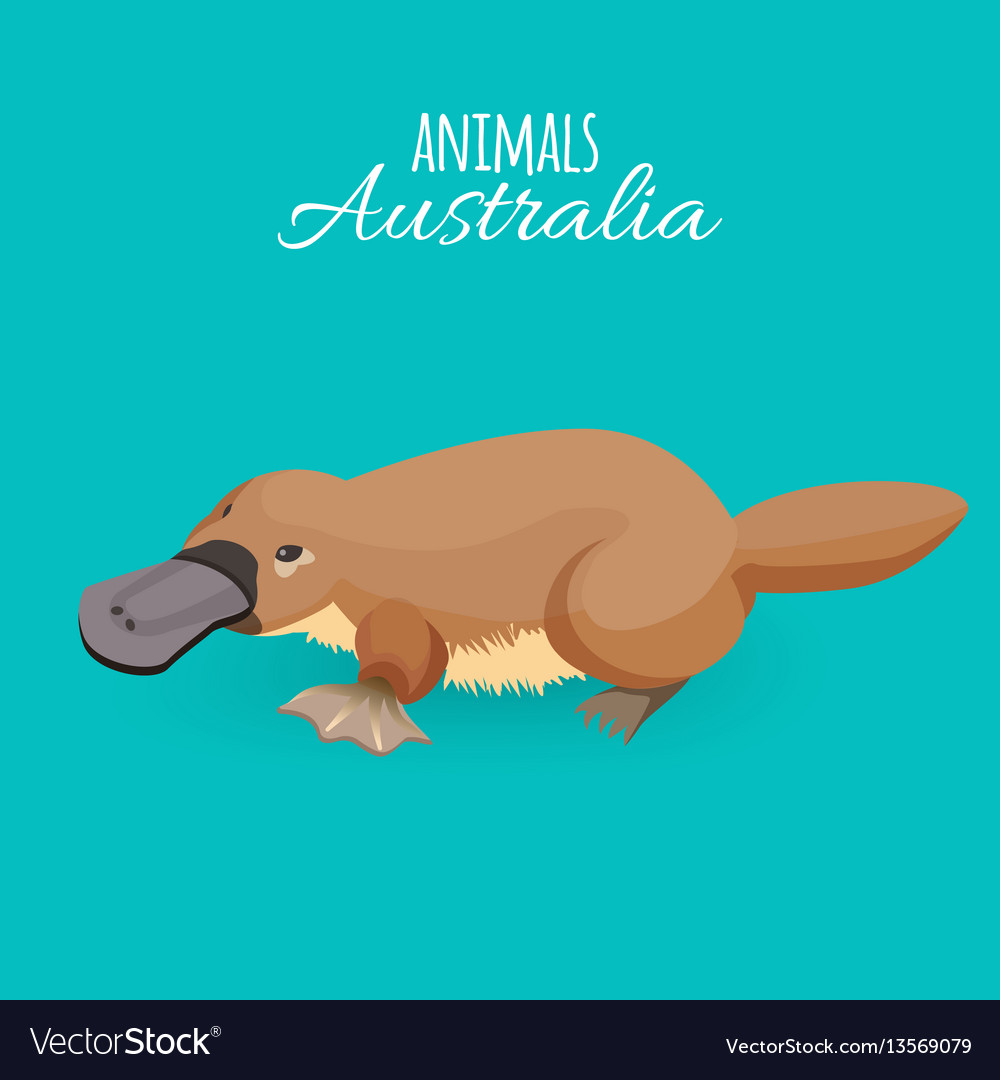 Australia animal brown crawling duckbilled vector image