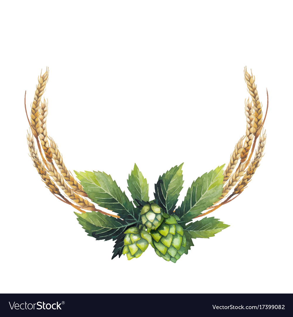 Watercolor hop and malt vector image