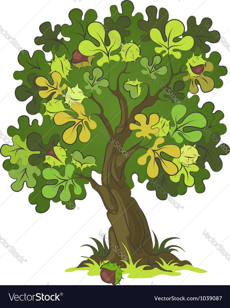 Chestnut tree Royalty Free Vector Image - VectorStock