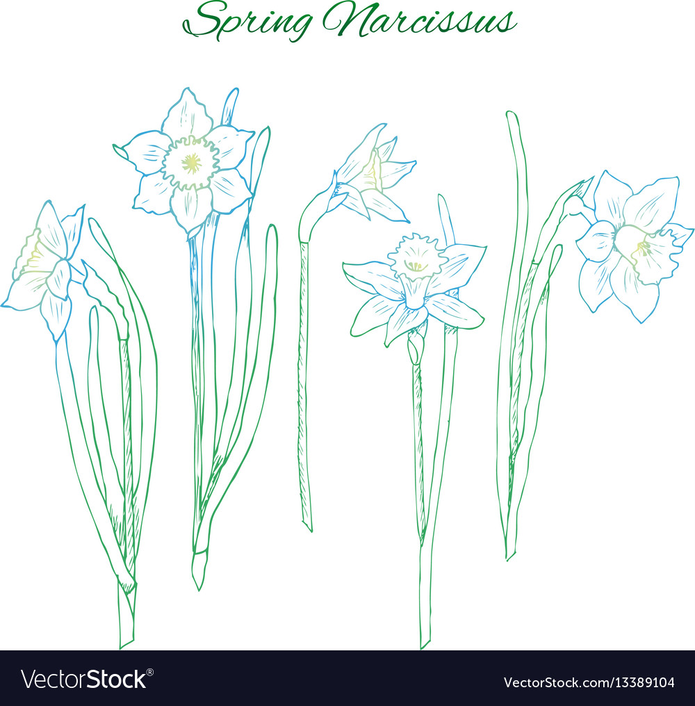 Colorful hand drawn flowers concept vector image