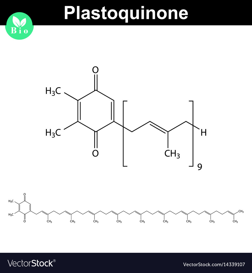 Plastoquinone - photosynthesis electron transport vector image