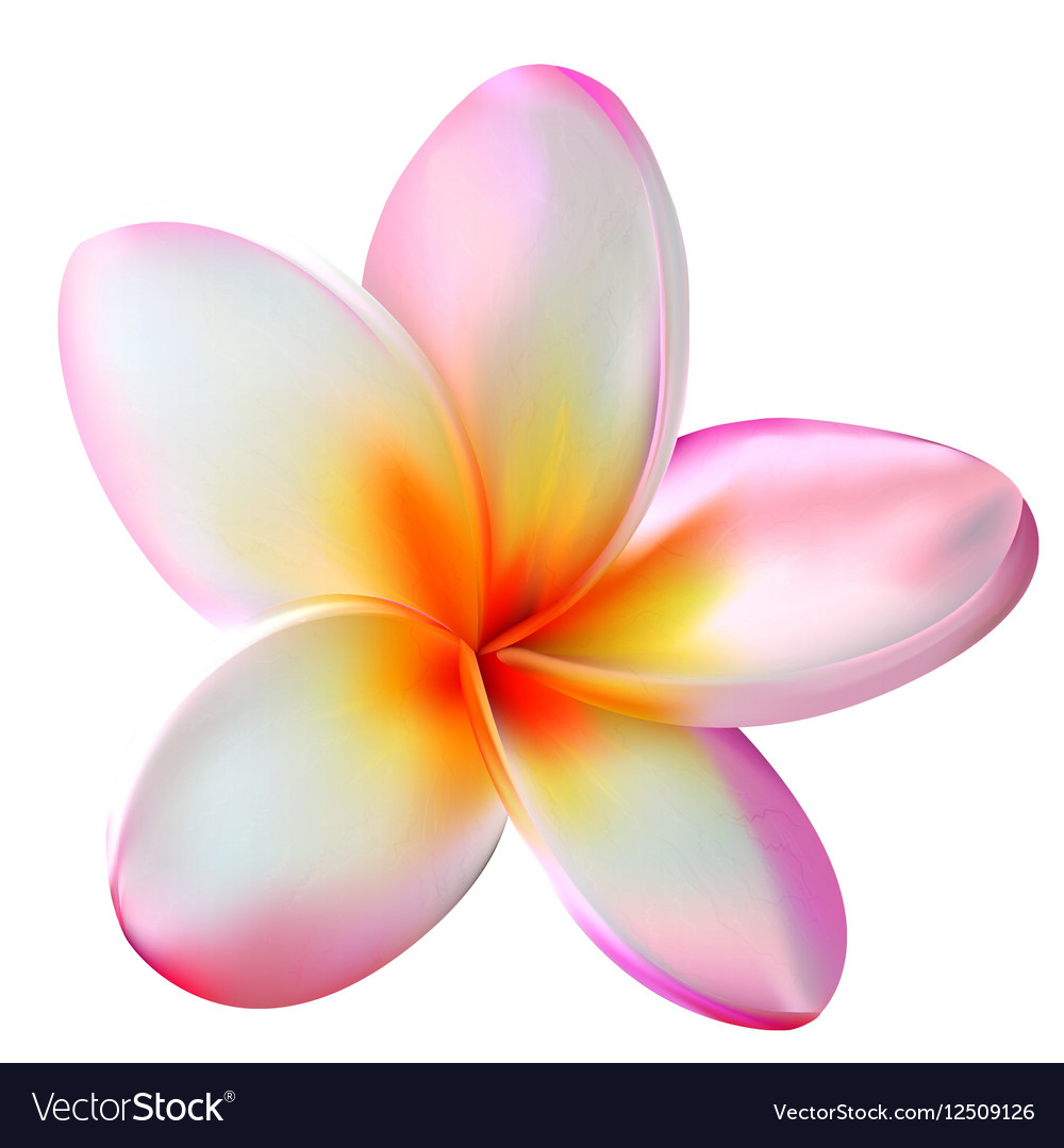 Pink plumeria flower royalty free vector image pink plumeria flower vector image mightylinksfo Choice Image