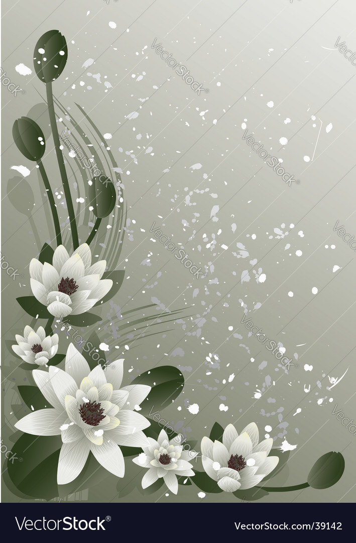 Blossoming lotus vector image