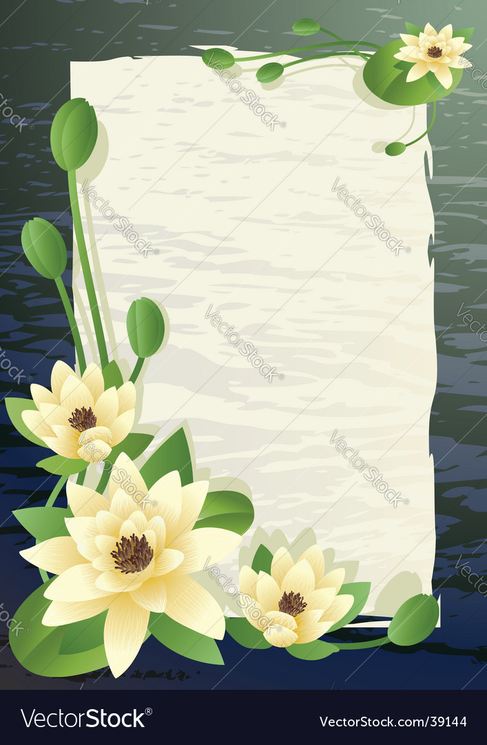 Blossoming lilies vector image