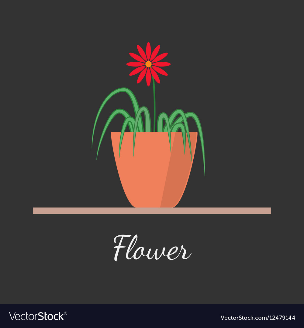 Flower in the pot vector image