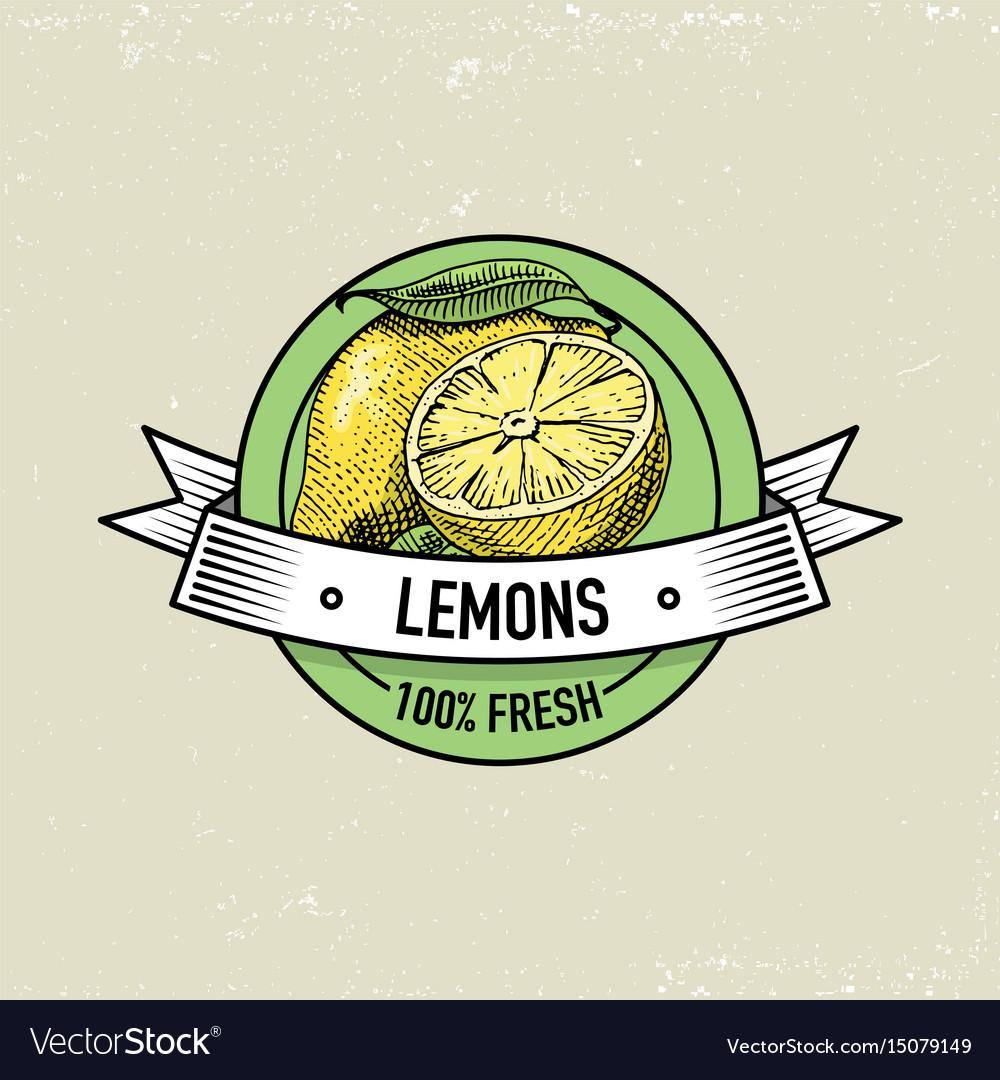 Lemon vintage hand drawn fresh fruits background vector image