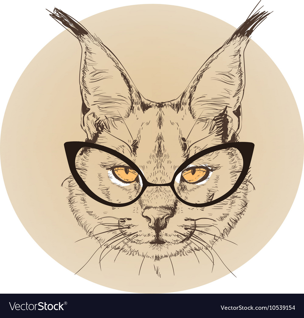 Hipster portrait of bobcat with glasses vector image