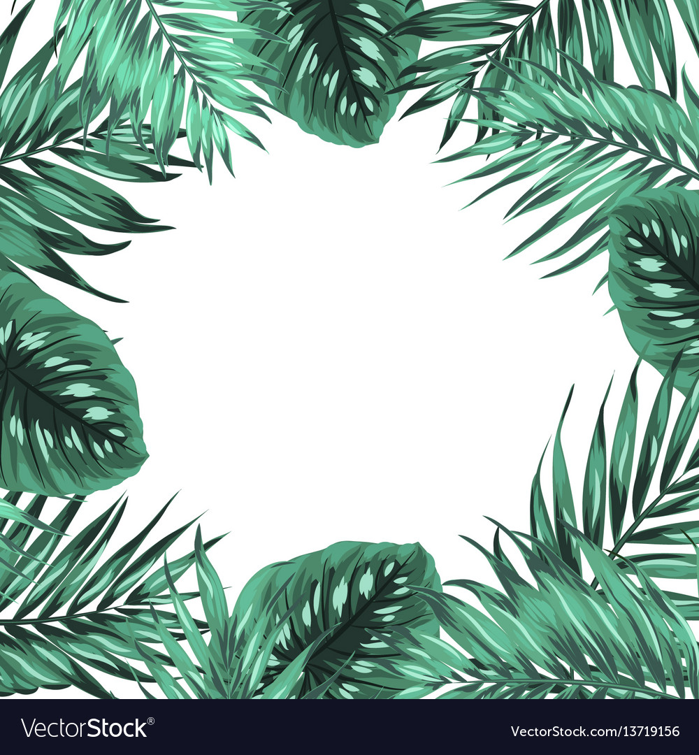 Tropical jungle palm monstera green leaves frame vector image