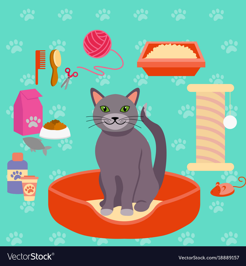 Cat and different pet care vector image