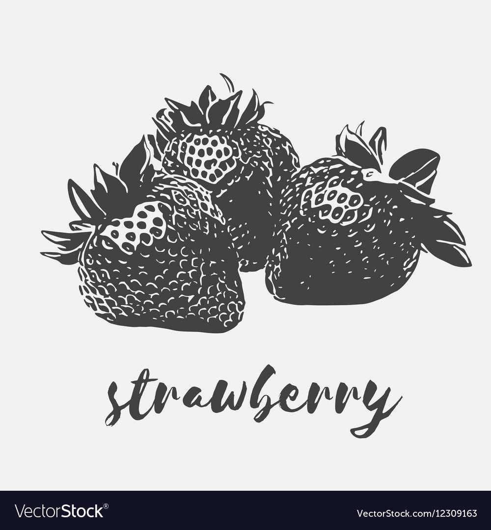 Strawberry organic vegan vector image
