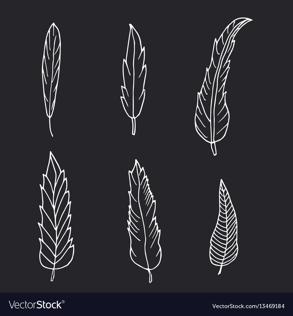 Hand drawn set of feathers on black background vector image