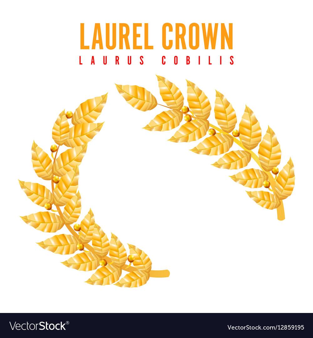 Laurel Crown Greek Wreath With Golden Leaves vector image